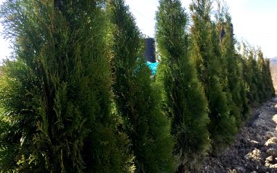 BURNiT засади 55 дръвчета в индустриалната зона на Шумен